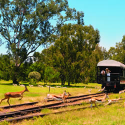 Rovos Rail - Rail, River & Waterfall Safari