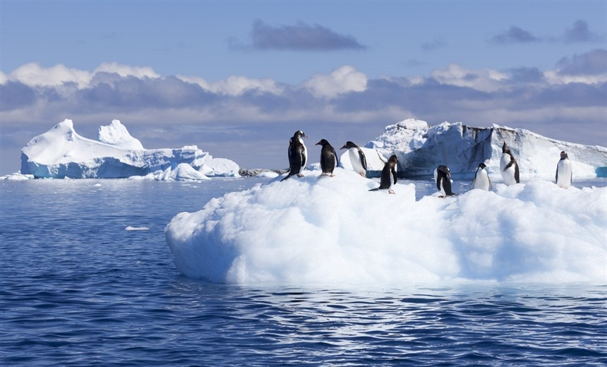 3 Amazing ways to experience Antarctica : Section 6