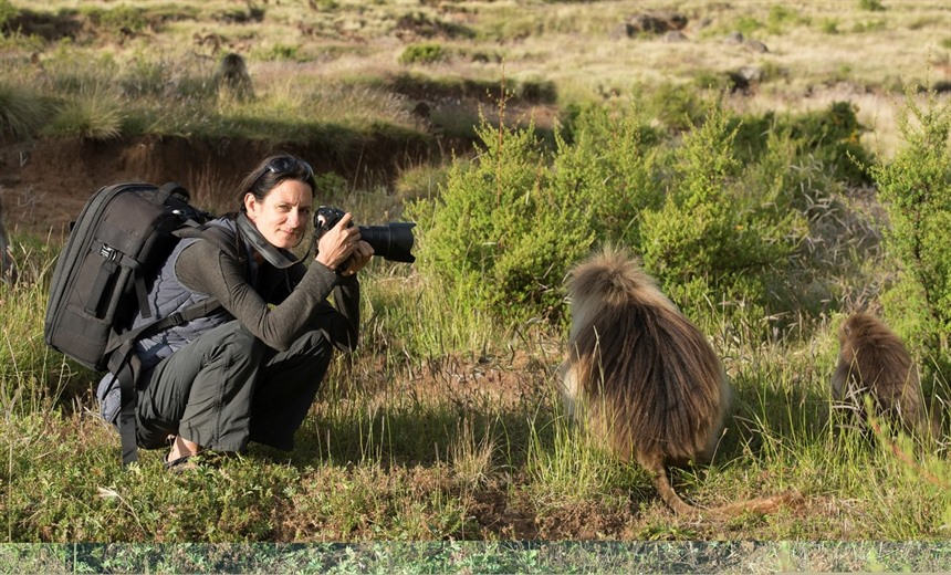 Ariadne photographing Gelada monkeys