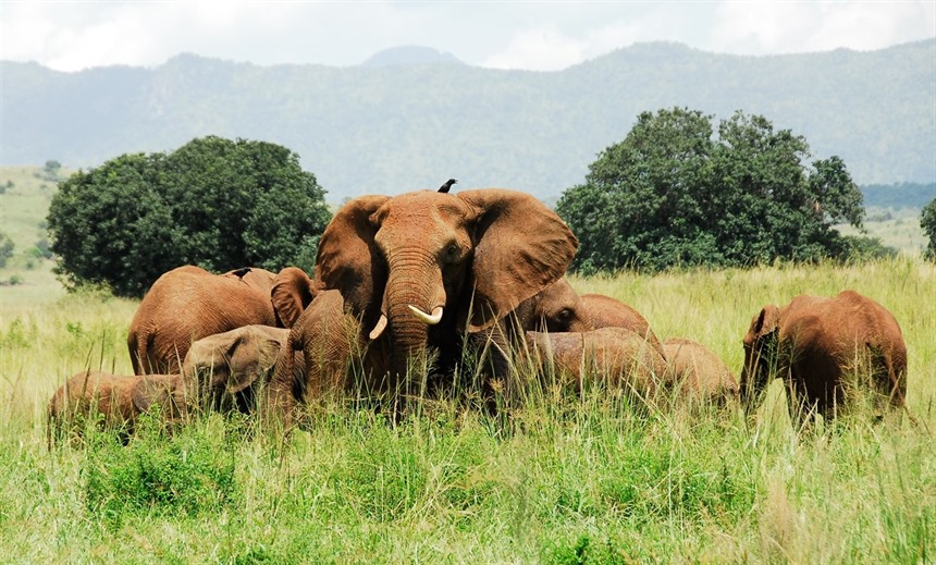 Uganda: Where to go and what to do : Section 10