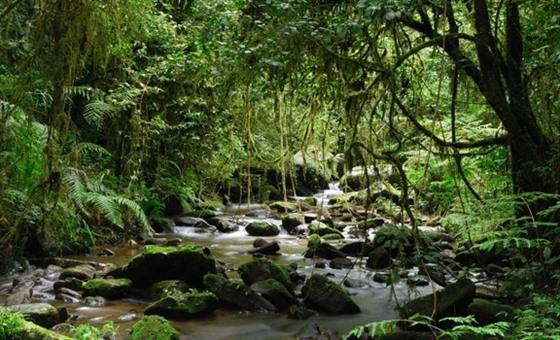 A stream in the primary rainforest of Ranomafana National Park, eastern Madagascar