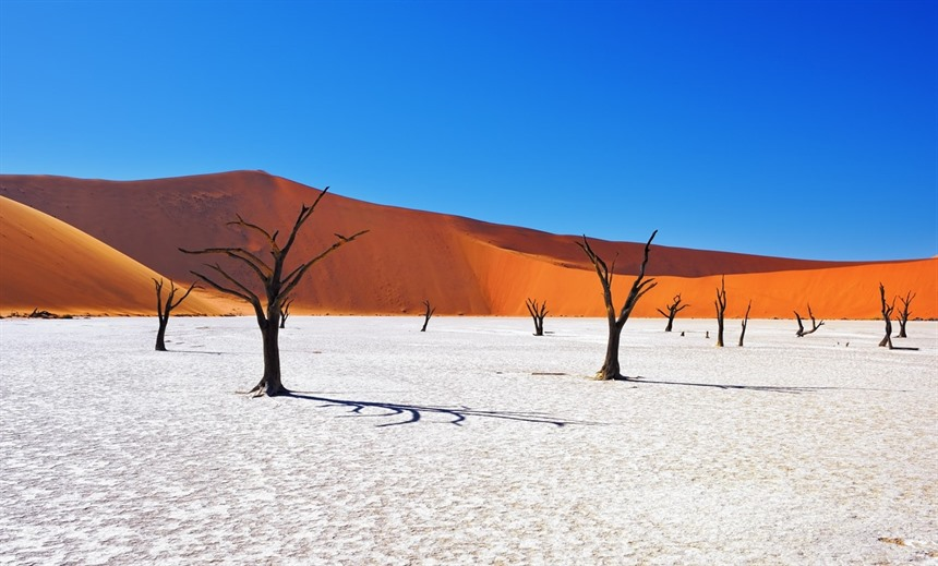 One of the iconic images of Namibia, this shows dead Camelthorn trees in the Deadvlei, Sossusvlei © Oleg Znamenskiy / Shutterstock