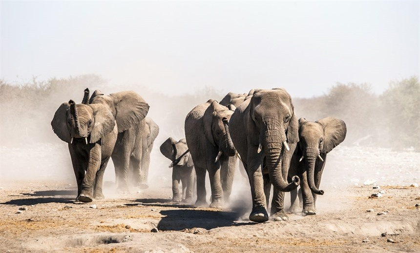 Elephants approach a water hole in Etosha National Park. © Efimova Anna / Shutterstock