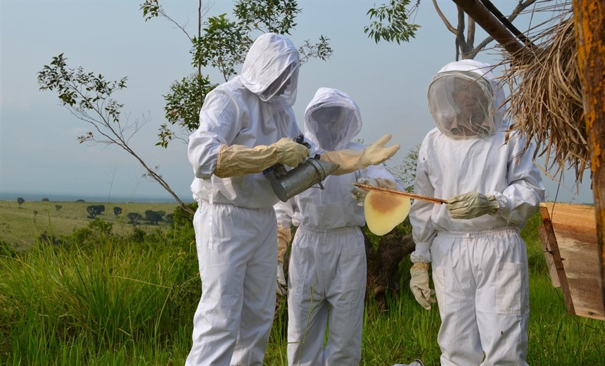 Bee-keepers work as part of a community-based project to use bees to deter elephants from trampling their crops. Photo by Craig Kaufman.