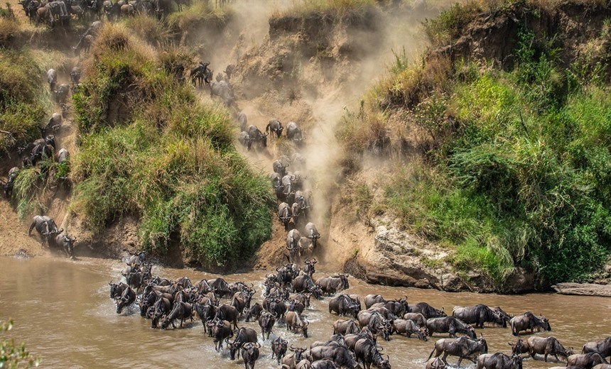 Great Wildebeest Migration in Tanzania