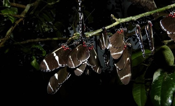 Some of the many insects of the cloud forest coming out at night