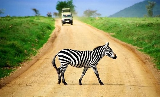 Who would've expected a zebra crossing, right?
