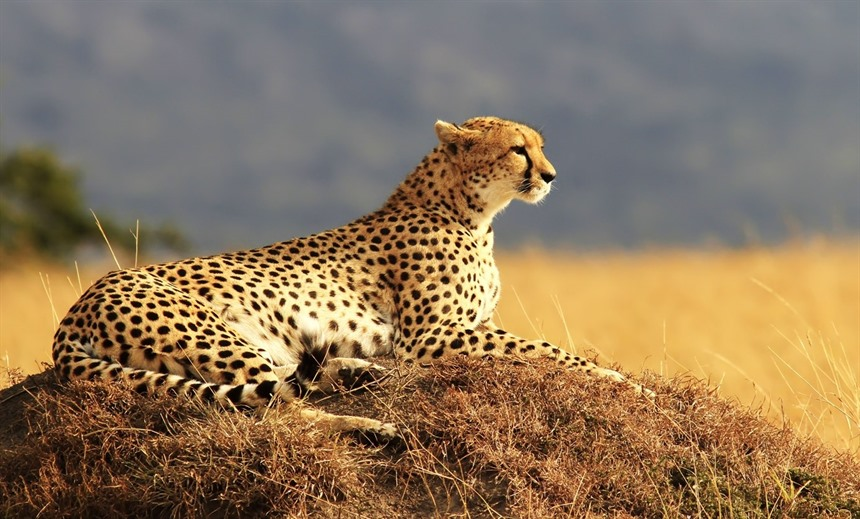 Top six Africa safari spots to spot big cats : Section 2