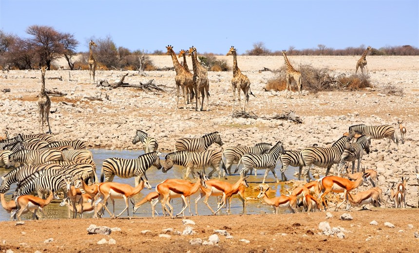 Five amazing experiences in Namibia  : Section 6