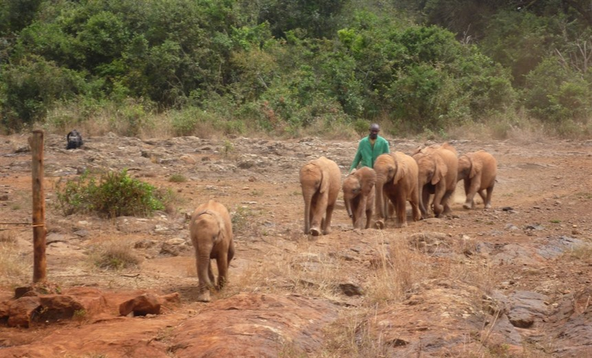 Elephant Encounters in Kenya and Malawi : Section 3