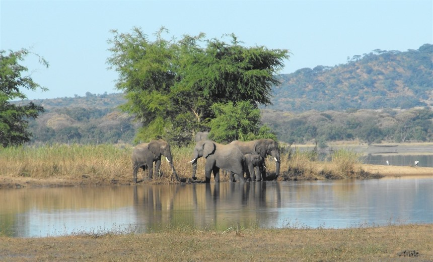 Elephant Encounters in Kenya and Malawi : Section 8