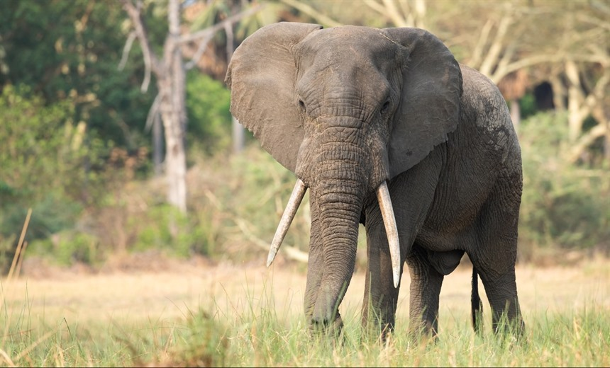 Elephant Encounters in Kenya and Malawi : Section 11