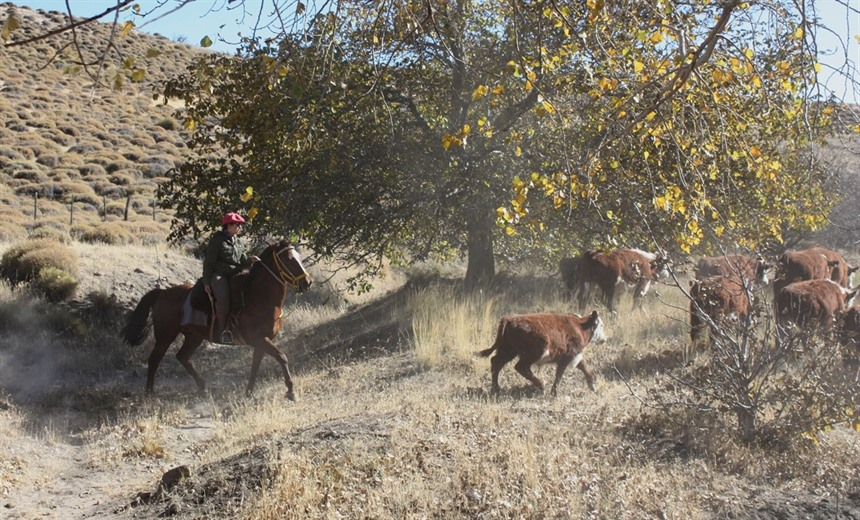 A gaucho for the weekend: life on the estancia in Argentina : Section 12