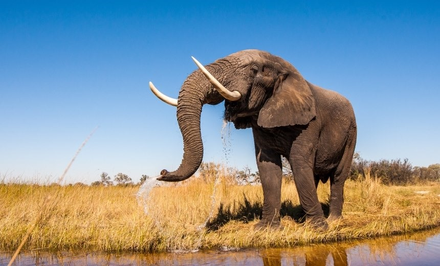 Top five safaris for responsible travellers : Section 2
