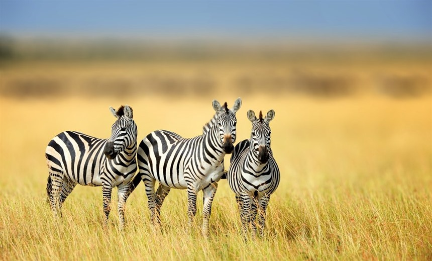 Rainbow's Africa: choosing your safari destination  : Section 7