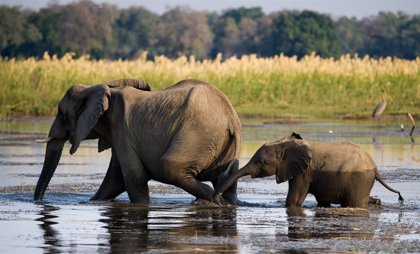 Rainbow's Africa: choosing your safari destination  : Section 8