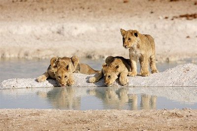 Safari Holidays Travel Blog Tag | Rainbow Tours