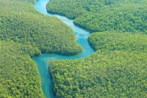 Brazil Amazon Rainforest