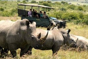 Eastern Cape Safari