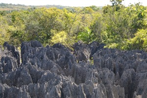 Western Dry Forests Holidays 2018/2019 | Rainbow Tours