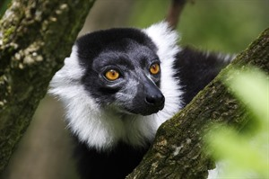2016 Madagascar Wildlife Discovery Tours