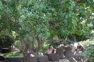 Lunching under the fig tree at Kanta Lodge