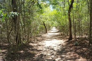 Ankarafantsika's trails are broad, well maintained and easy to walk.