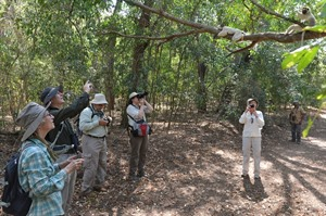 Rainbow Tours group with Sifakas in Berenty (Daniel Austin)