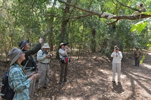 Rainbow Tours small group watching sifakas (Daniel Austin)