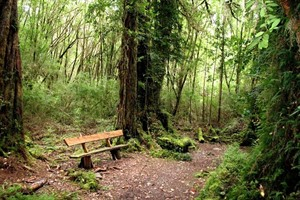 Secluded forests near AWA Puerto Varas