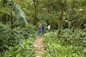 On a trail at Finca Rosa Blanca