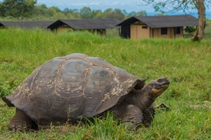 Magic Galapagos Tented Camp, neighbours