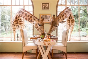Giraffe Manor - The Safari Collection