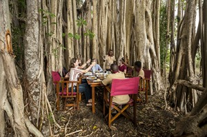 Dining at a massive wild Fig