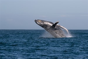 Whale watching during your stay