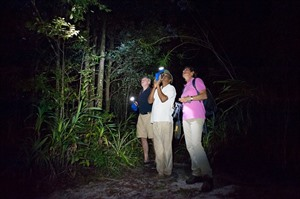 Guided night walks are really rewarding in the lowland rainforest