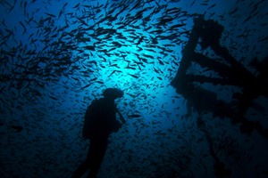 There is superb diving to be had in Nosy Be archipelago