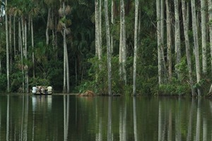 Inkaterra Reserva Amazonica, guided excursions