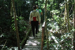 Excursions in the rainforest