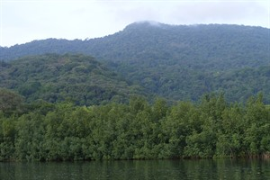 Evergreen forest and mangrovea