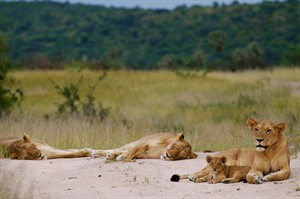 Azura Selous Game Reserve