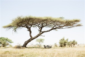 Namiri Plains 7