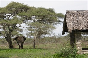 The local wildlife at Ndutu Lodge