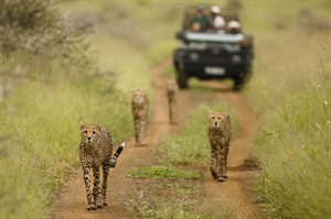 Amakhosi Safari Lodge Activity