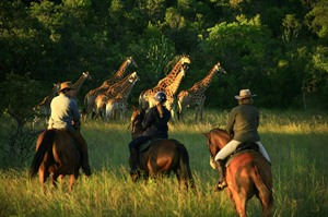 Horse Riding Safaris