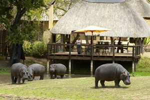Hippos at Arathusa Safari Lodge