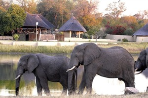Elephants at Arathusa Safari Lodge