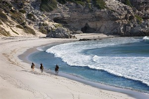 Grootbos Nature Reserve Beach Horse Riding