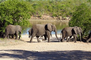 Game-viewing in Kruger National Park