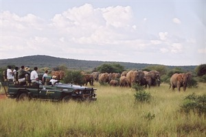 On Safari At Makanyane Safari Lodge
